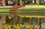 咲き誇るチューリップ2008年4月20日オランダ、キューケンホフ